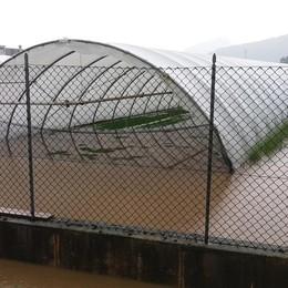 Maltempo, ecatombe per l'agricoltura «Danni per 4 milioni nella Bergamasca»