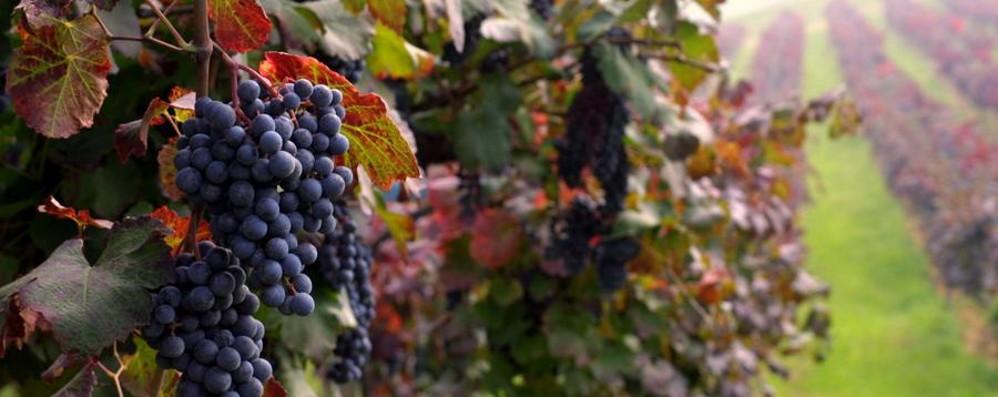 Guida Slow Wine 2017 Cinque cantine Bg segnalate