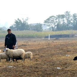 Open International Sheepdog Trial  A Cologno raduno dei cani pastore