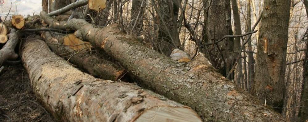 Spiana pezzo di bosco con la ruspa Gli serviva una strada per il capanno