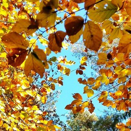 Tra le foglie