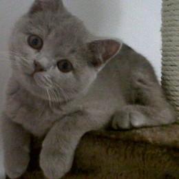 Gatto resta incastrato nel calorifero Non bastano i pompieri, c'è il veterinario