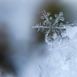 Meteo, in arrivo un'ondata di gelo Neve in pianura, sembra la volta buona