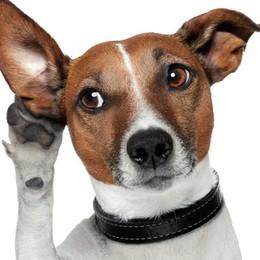 Il comando per un cane? Badate, non è una supplica