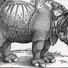 In mostra l'interpretazione  del capolavoro di  Dürer
