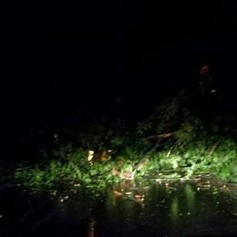 Nembro-Selvino, albero sulla strada Bloccata la carreggiata a San Vito