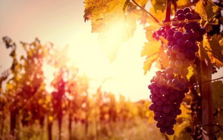 In Valcalepio tra i vini rossi