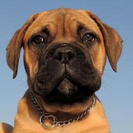Le fedi degli sposi portate dai cani? Il sindaco  dice no: «Esagerato»