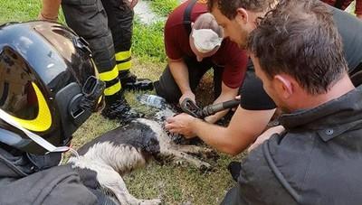 Cane salvato dall'incendio L'impresa dei vigili del fuoco