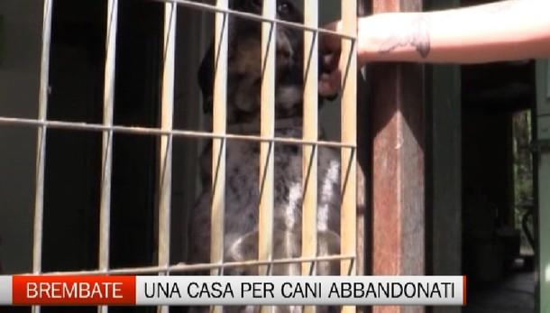 A Brembate una 'casa' per i cani abbandonati
