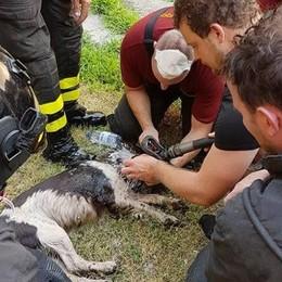 Morto il cane estratto dalle fiamme Era stato salvato dai vigili del fuoco