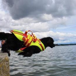 Cani bagnino, ecco i primi salvataggi   Da Seriate alle spiagge di tutta Italia