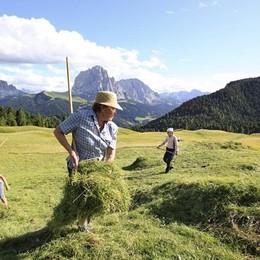Vacanza in Val Gardena a falciare il fieno