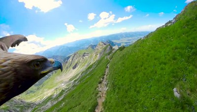 In volo con l'aquila sulle montagne Un video dalla prospettiva spettacolare