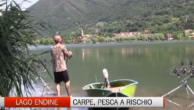 Allarme sul  Lago di  Endine   A rischio la pesca delle  carpe