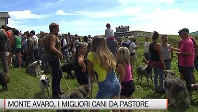 Monte Avaro, il raduno dei cani da pastore