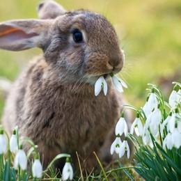 Galline e conigli come premi Multata la sagra di Sant'Alberto