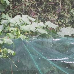 Temporale e grandine in Valle Seriana Allerta meteo anche per giovedì - Video