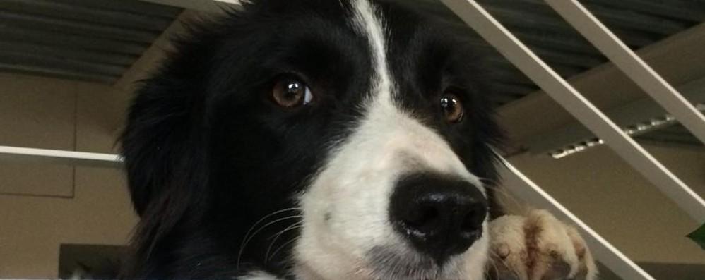 Tiene in casa venti cani a Verdello Multata dopo le proteste dei vicini