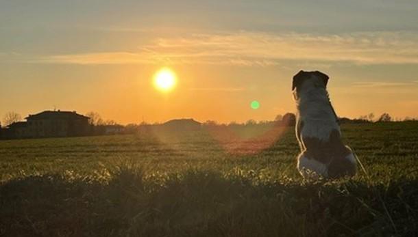 «Ammirare il tramonto...»