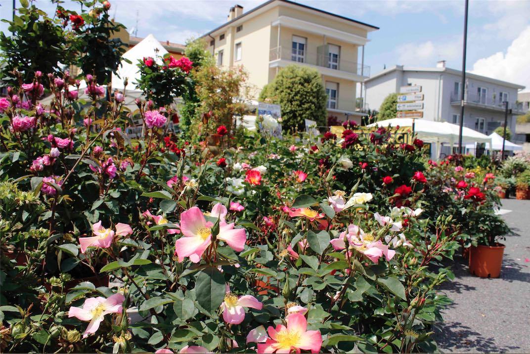 A maggio il colorato giardino di padenghe verde orobie