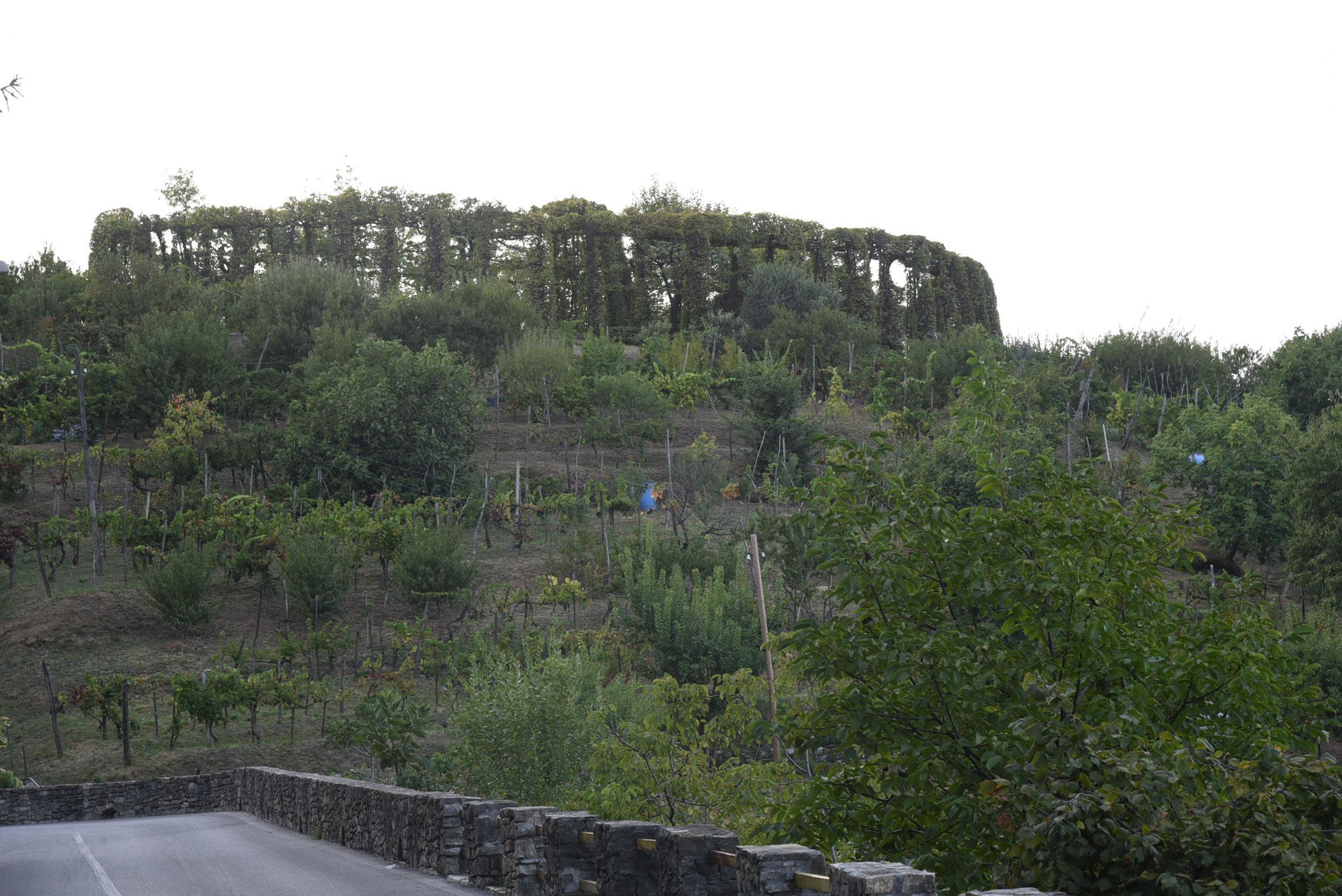 Parco dei Colli si scoprono i roccoli