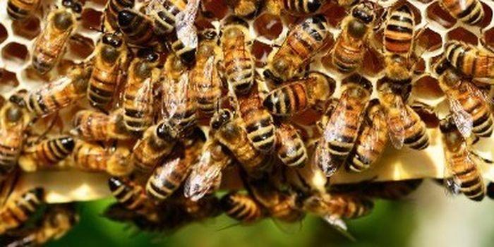A Edolo lezioni di apicoltura