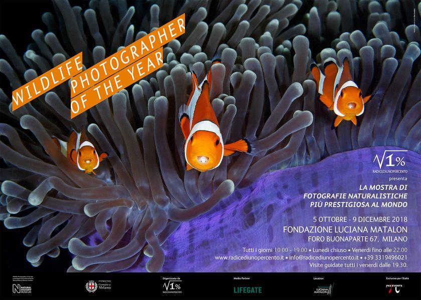 Wildlife Photographer of the Year, a Milano le foto della 53° edizione