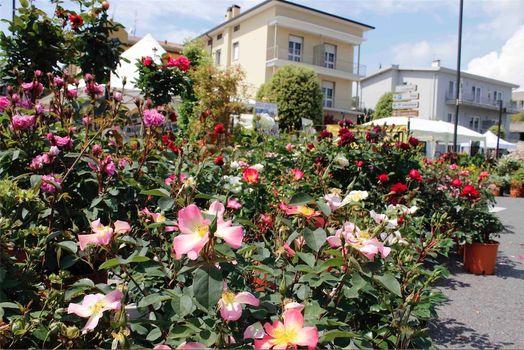 A maggio il colorato giardino di Padenghe verde