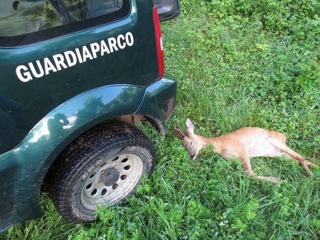 Foto shock per salvare la selvaggina