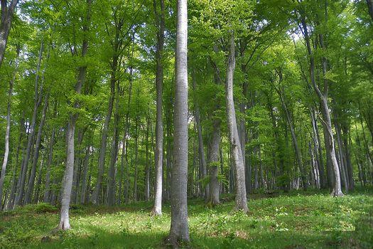 Come stanno i nostri boschi?