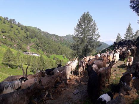 In Valsassina gli incontri Tra-Montani