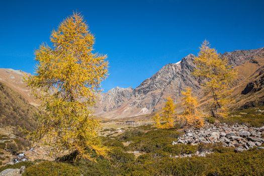 L'autunno con Orobie, una vera meraviglia