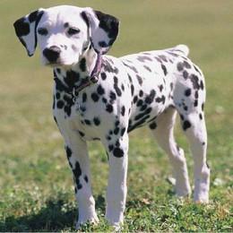 Cani, sanzioni e buona educazione
