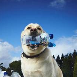Il «cane da riciclo» entra nel Guiness