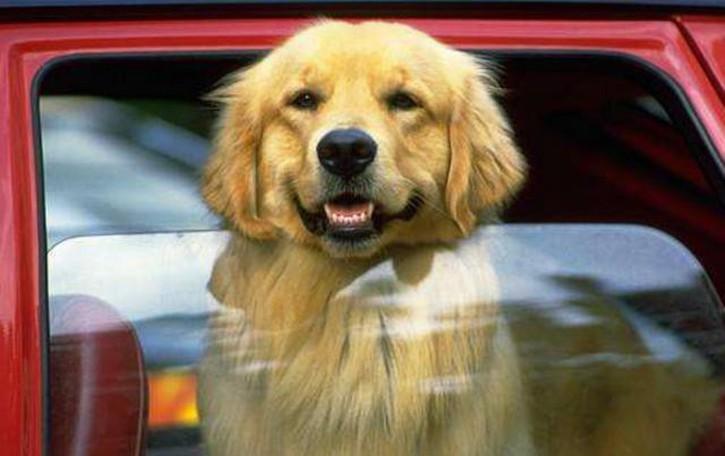 Vacanze col cane? Ecco tutti i consigli