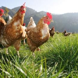 Diossina e pcb nelle uova:   nessun allarme in Bergamasca