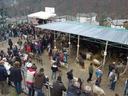 La fiera delle capre a Valgoglio