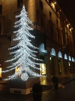 Si accende l'albero di Natale