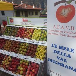 Per la «Mela Val Brembana»  un nuovo marchio di qualità
