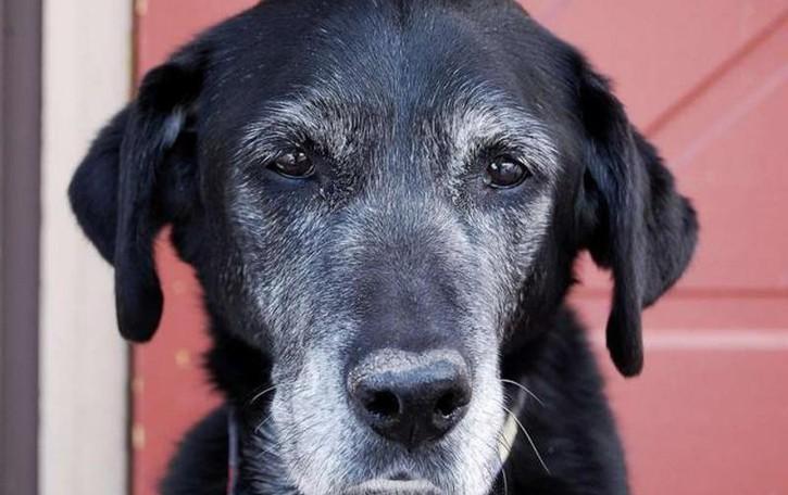 La gestione  del cane anziano