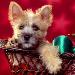 Un cucciolo  per Santa Lucia