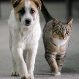 Cane e gatto insieme?  Perchè no? Si può fare