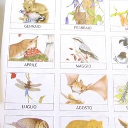 I piccoli e grandi predatori  nel calendario delle Orobie