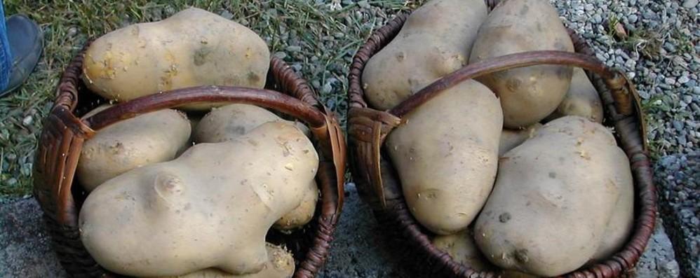 Una patata che ha 200 anni Domenica festa a Schipario