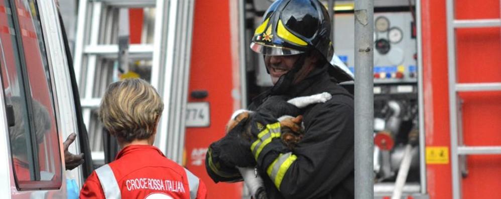 Incendio a San Giovanni Bianco I vigili del fuoco salvano un gatto