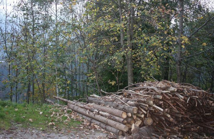 In Val di Scalve rubno anche la legna nei boschi