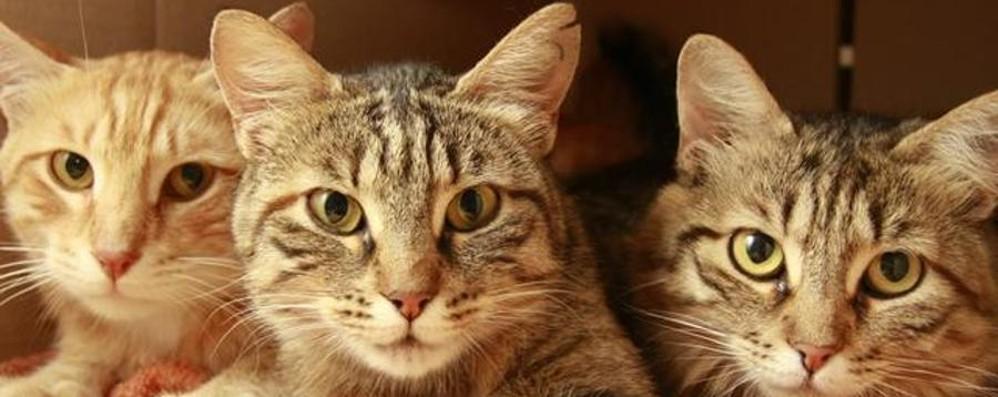 Ricordate i gatti lasciati davanti  a L'Eco? Da sabato 4 sono tutti da adottare