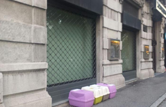 Le gabbiette con i gatti abbandonate davanti a L'Eco di Bergamo