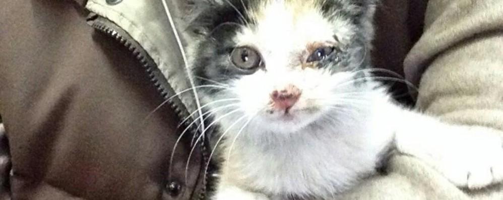 Gattina terrorizzata salvata da volontario È stata già adottata. L'hanno chiamata A4
